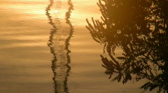 Reflexion in morning beams of sun. Stock Footage