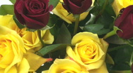 Smell the roses Stock Footage