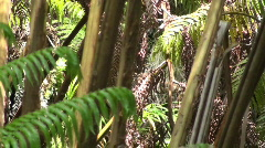 Rainforest ,no where to turn Stock Footage