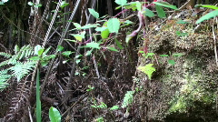 Rainforest understory, jungle Stock Footage