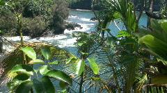 Tropical rainforest, Hawaii Stock Footage