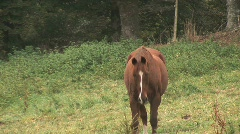 Country Horses - stock footage