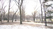 Stock Video Footage of Winter in Central Park (Blownout)