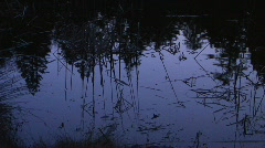 pond reflection night 2 - stock footage