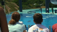 Dolphins Act Stock Footage