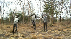 Hamer Children, Omo Valley, Ethiopia Stock Footage