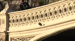 Pigeon on bridge in Central Park Stock Footage