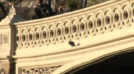 Stock Video Footage of Pigeon on bridge in Central Park