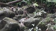 Rain forest understory, Hawaii Stock Footage
