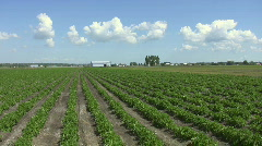 Farm field.  Stock Footage