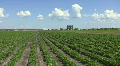 Farm field. Timelapse clouds. Footage