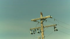 Hawk on powerpole Stock Footage