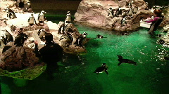 Penguins in Aquarium  - stock footage
