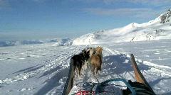 Huskies Tiniteqilaq Greenland Stock Footage