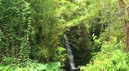Rainforest, jungle Stock Footage