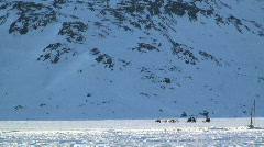 Male driving sledge near Tasiilaq Greenland Stock Footage