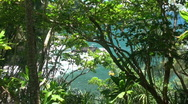 Rainforest view to coast Stock Footage