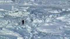 Seal Hunter Tiniteqilaq  Greenland Stock Footage