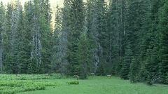 Wild Elk Chinook Pass 4 Stock Footage