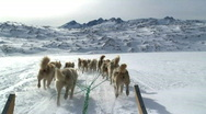 Stock Video Footage of Huskies Tiniteqilaq Greenland