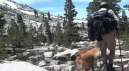 Hiker, dogs, Irish Setter Stock Footage