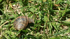 A snail in the grass Stock Footage