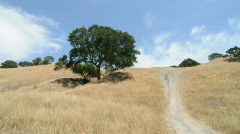 Tree Hill Time Lapse Stock Footage