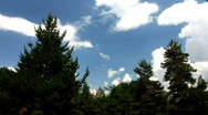 Moving clouds over the fir-trees Stock Footage