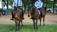 Stock Video Footage of police officers on horse