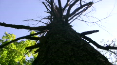 Mushroom growing on tree in upstate New York Stock Footage