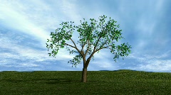 Money Tree HD1080 - stock footage