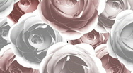Animated Roses Background Stock Footage