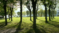 Tree shadows Stock Footage