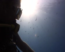 Diver interacting with a Longfin batfish Stock Footage