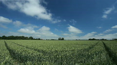 Timelapse Clouds over Realtime green wheat field  Stock Footage