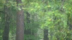 Raining on pine trees in upstate New York Stock Footage
