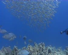 Underwater photographer and small bait ball Stock Footage