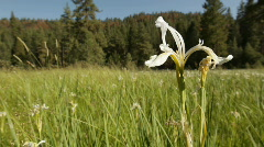 Snp_wildflower_meadow01 Stock Footage