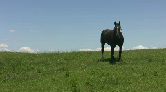 Black horse on green hillside. Stock Footage