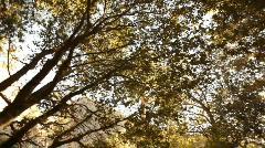 kc_sunset_through_trees01 - stock footage