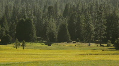 Snp_meadow03 Stock Footage