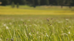 Snp_weeds_meadow Stock Footage