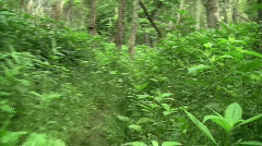 POV Walking On Forest Trail Stock Footage