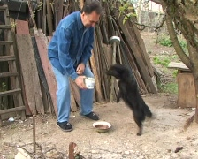 Friends: man helping thirsty dog Stock Footage
