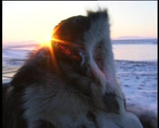 Chukchi shepherd on cross-country vehicle in polar tundra. Hunting with lasso f Stock Footage