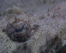Crocodile fish - close up Stock Footage