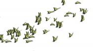 Swallowtail butterflies flock Stock Footage