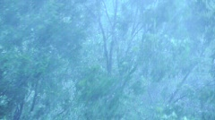 Crazy Rain Storm Trees Blowing Wind HD - stock footage