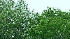 Trees blowing in the wind - stock footage