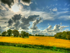 Stock Video Footage of Clouds and blue sky over yellow flowers fields hdr time lapse